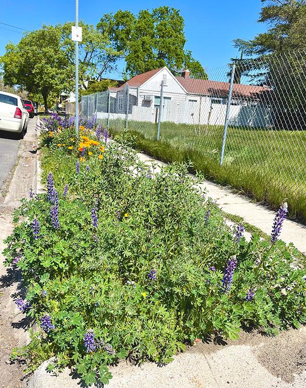 Stockton_Garden_in_Bloom-1