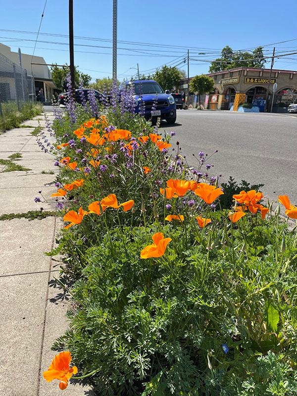 Stockton_Garden_in_Bloom-2