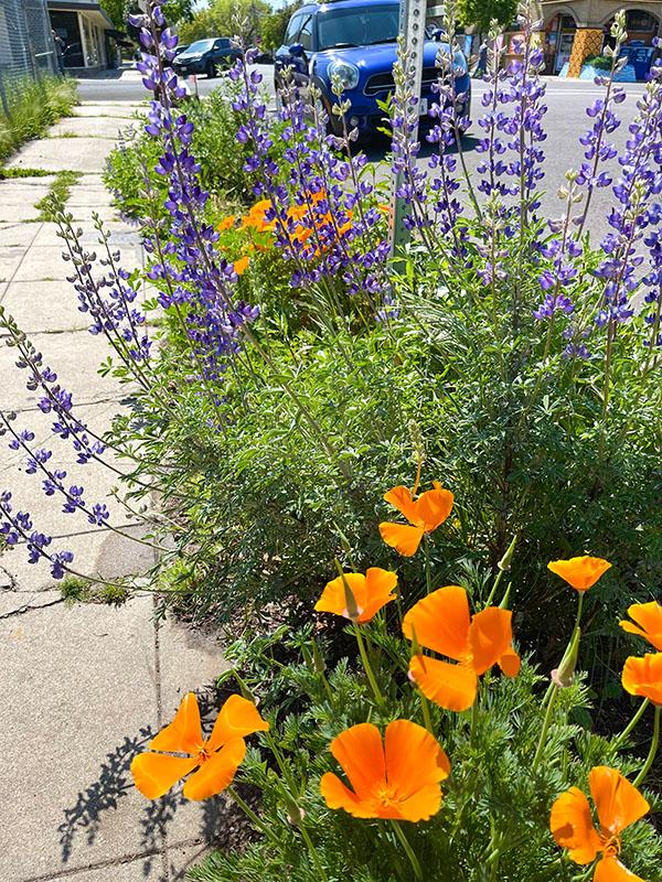 Stockton_Garden_in_Bloom-3